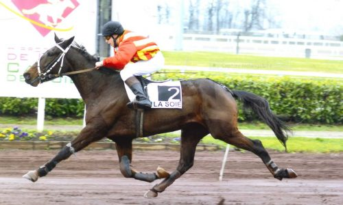galop trot